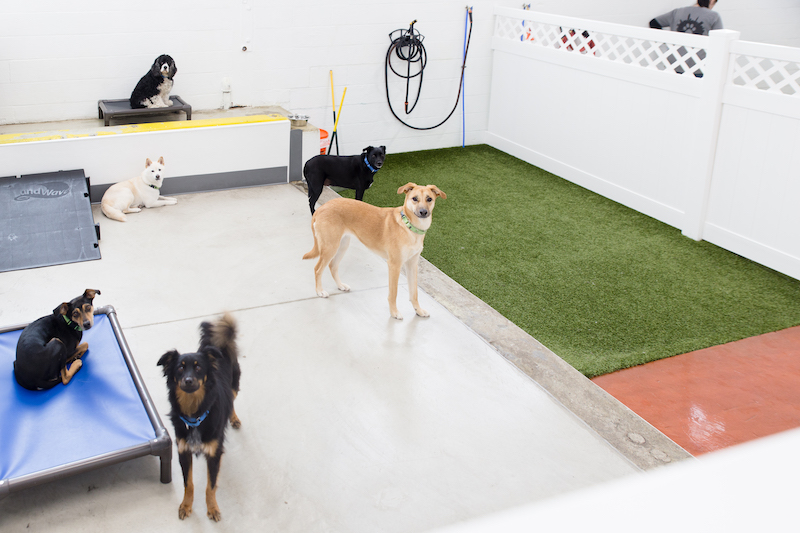 Stay! Dog Daycare & Boarding Services In Cleveland Ohio
